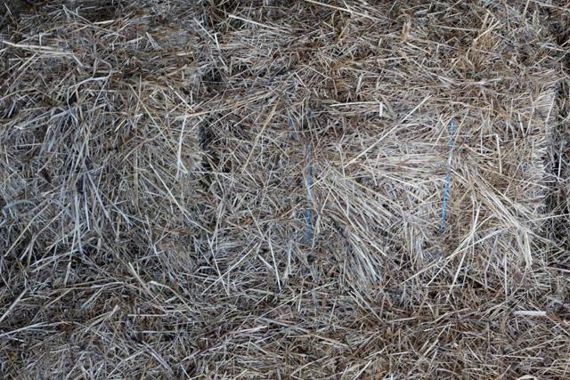 Grass Hay-0