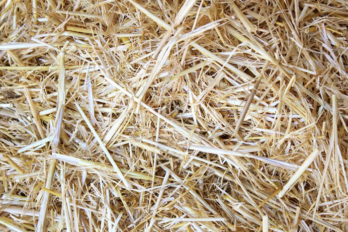 Barley Straw-0