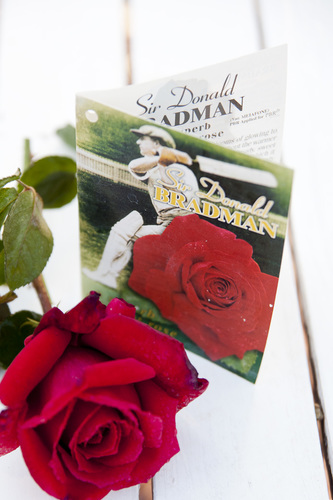 Sir Donald Bradman - 90cm Standard SOLD OUT-65